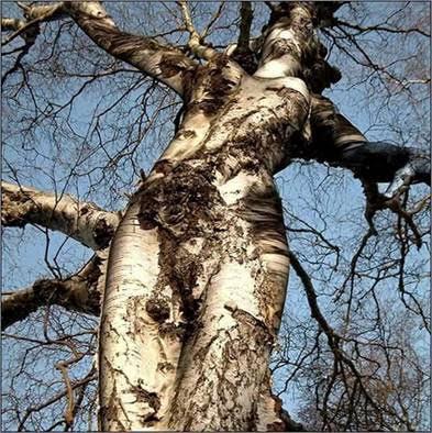 """Résultat de recherche d'images pour """"Nos arbres sont dépouillés"""""""